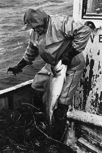 pescador bacalao