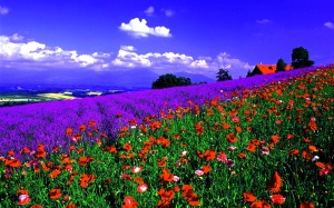 Los-Mejores-paisajes-de-flores-mas-hermosos-1