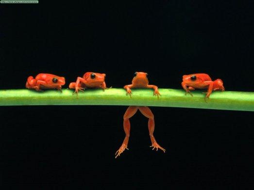las cuatro ranas