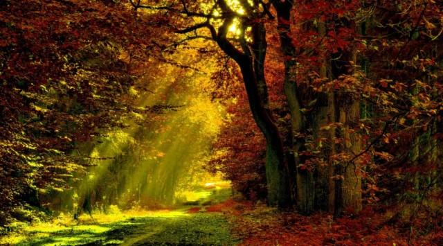 my-path-home