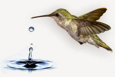 colibrí y agua